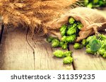 beer brewing ingredients hop in ... | Shutterstock . vector #311359235