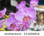 Orchids Orchids  Purple  ...