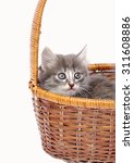 Stock photo gray tiny kitten sits in wicker basket on white isolated 311608886