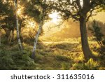 stunning sunrise landscape in... | Shutterstock . vector #311635016