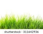 grass on white background | Shutterstock . vector #311642936