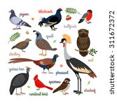 Vector Bird Icons. Colorful...