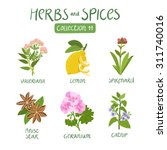 herbs and spices collection 11. ... | Shutterstock .eps vector #311740016