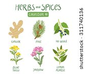 herbs and spices collection 10. ... | Shutterstock .eps vector #311740136