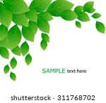 green leaves on white... | Shutterstock .eps vector #311768702