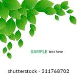 green leaves on white... | Shutterstock .eps vector #311768702