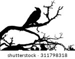 a silhouette of a raven sitting ... | Shutterstock . vector #311798318