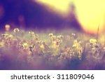 summer landscape background sun ... | Shutterstock . vector #311809046
