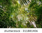 view of the thick lush green... | Shutterstock . vector #311881406