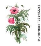 bouquet of red poppies.... | Shutterstock . vector #311952266