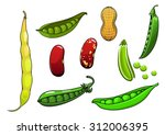 cartoon fresh legumes and... | Shutterstock .eps vector #312006395