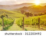 vineyard on sunset | Shutterstock . vector #312203492