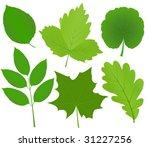 green leaves vector | Shutterstock .eps vector #31227256