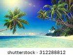 Tropical Paradise Beach...