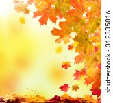 autumn leaves background with... | Shutterstock . vector #312335816