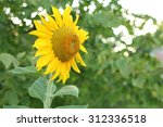 close up of a beautiful... | Shutterstock . vector #312336518