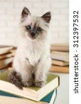 Stock photo cute little cat with books on light background 312397532