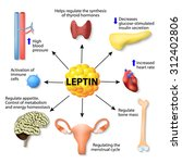 leptin is a hormone made by... | Shutterstock .eps vector #312402806