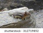 Chipmunk Looking Round On Rock
