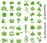 natural design elements | Shutterstock .eps vector #313029902