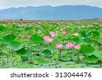 Постер, плакат: Vietnam flower lotus flower