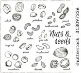 set of nuts and seeds drawings. ... | Shutterstock .eps vector #313097336