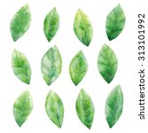 watercolor green leaves pattern ... | Shutterstock . vector #313101992