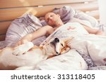 Stock photo beagle dog sleep with his owner in bed 313118405