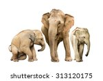 family elephant on isolated. | Shutterstock . vector #313120175