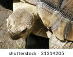 close up  of tortoise head - stock photo