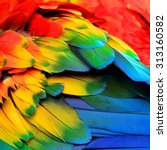 Red Yellow And Blue Feathers O...
