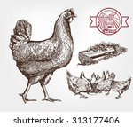 feeding chickens. set of... | Shutterstock . vector #313177406