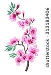 hand drawn peach blossom vector | Shutterstock .eps vector #313183406