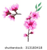 hand drawn peach blossom vector | Shutterstock .eps vector #313183418