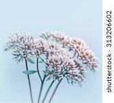 blue flower background    Shutterstock . vector #313206602