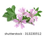 Mallow Flowers And Leaves ...