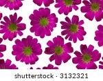 violet flower on the light box | Shutterstock . vector #3132321