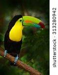 bird with big bill keel billed... | Shutterstock . vector #313280942
