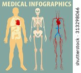 medical infographic of human... | Shutterstock .eps vector #313298066