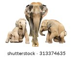 family elephant on isolated. | Shutterstock . vector #313374635