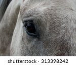 Teardrop Under Eye Of Horse.