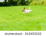 Stock photo dog playing and running 313453232