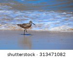 seagull walking gulf of mexico... | Shutterstock . vector #313471082