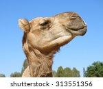 Camel  Nt  Australia