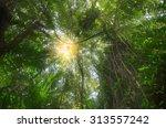 sun rays shining through trees  ... | Shutterstock . vector #313557242