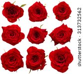 Stock photo set of red roses isolated on white background 313732562