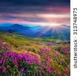 blossom carpet of pink... | Shutterstock . vector #313748975