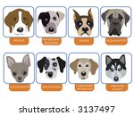 illustration of purebred dogs ... | Shutterstock . vector #3137497