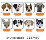 illustration of purebred dogs ... | Shutterstock . vector #3137497