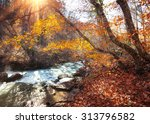 beautiful autumn forest with... | Shutterstock . vector #313796582
